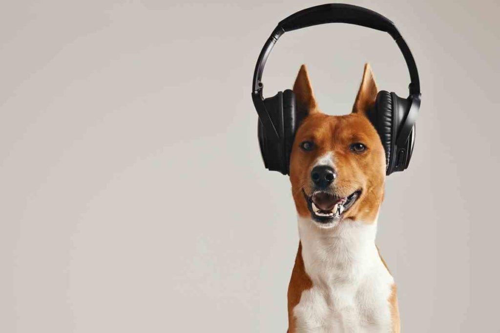 犬とヘッドホン